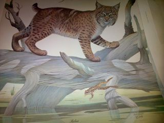 Illustration  artwork Bobcat by Ron Jenkins
